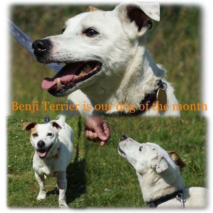 Benji1
